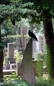 Crow in Yanaka Cemetery, Photo by Jason Josephson rights reserved
