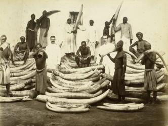 Ivory_1880s