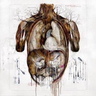 Anatomical-illustrations-by-Nunzio-Paci-5